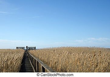 Birdwatcher at a platform in the reeds at the swedish island...