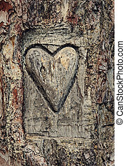 Heart carved in the bark of a tree, symbol of love