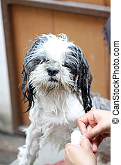 Dog taking a shower with soap and water. - The Dog taking a...