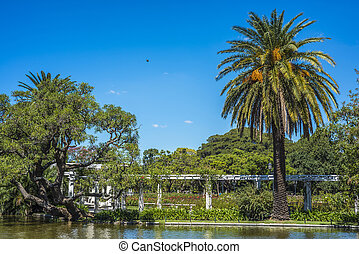 Palermo Woods in Buenos Aires, Argentina. - Ducks on Parque...