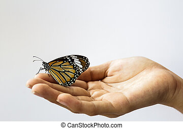 Woman hand holding a beautiful butterfly .