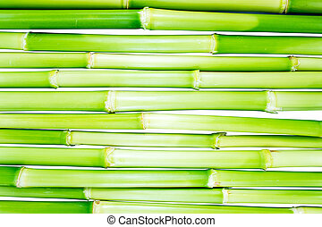 bamboo - green bamboo fence background