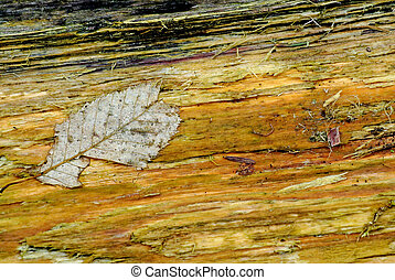 Old leaf on rotten wood