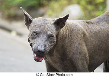 feral and leprosy dog -  Feral dog being leprosy on road