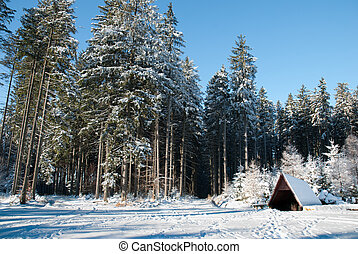 Forest clearing in winter