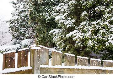 Snow of Wood Fence with Evergreens in Background - Snow on a...