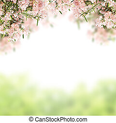 Pink flowers and green grass Isolated on white background