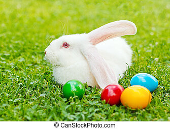 White easter rabbit in green grass with colorful eggs