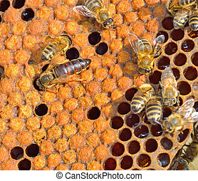 Queen bee on honeycomb