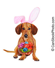 Dog holding easter basket with colorful eggs