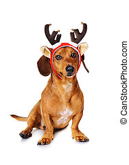 reindeer christmas dog on white background