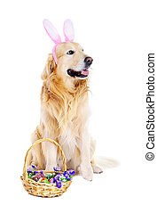 golden retriever with bunny ears with easter basket