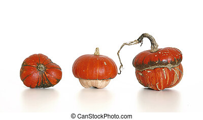 pumpkin - Three orange coloured pumpkins on isolated white...