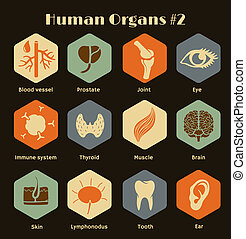 Set of icons human organs, systems - Vector retro icons of...