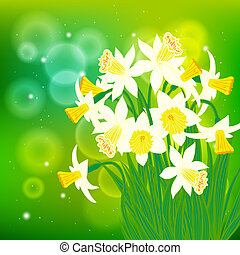Vector card with white daffodils on light bokeh background....