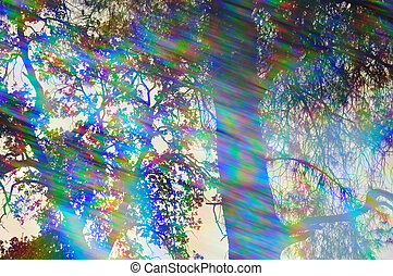 abstract forest reflections - Light rays spectrum colors and...