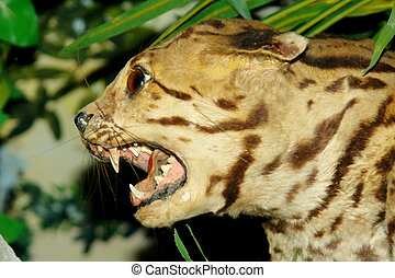 Feline animal with attack expresion. head closeup...