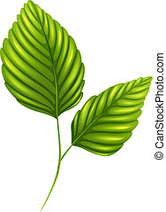 Green leaves - Illustration of the green leaves on a white...