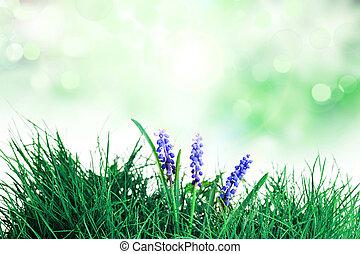 flowers blooming in spring farm field