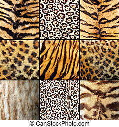 collection of wild cats fur, tigers, leopards and ocelot
