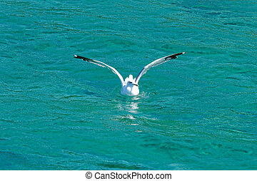 white seagull flying over blue, turquise sea