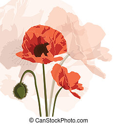 Papaver graphic - Vector graphic of red papaver, square card