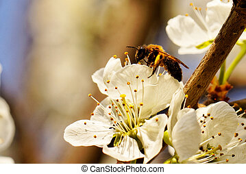 Flowering tree - Beautiful close up photo of a flowering...