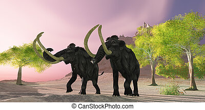 Woolly Mammoth Morning - A rosy morning finds two Woolly...