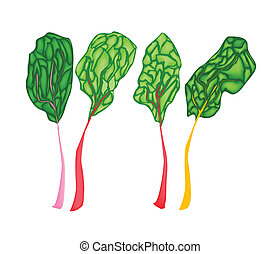 Fresh Ruby Red Chard on White Background - Vegetable, Vector...