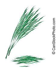 Fresh Green Acacia Pennata on White Background