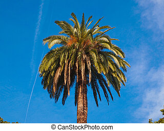 Palm tree - A tropical palm tree scientific name Arecaceae...