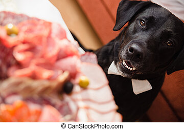 hungry dog looks at a plate of sliced meat