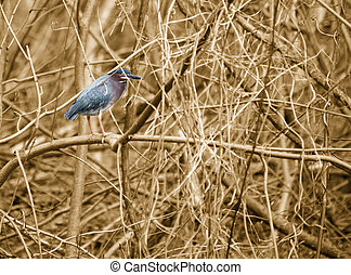 blue bird on sepia - sepia tinted pictures with a beautiful...