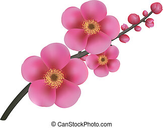 Sakura Flowers, With Gradient Mesh, Vector Illustration