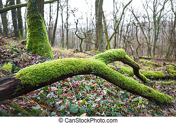 Lush green moss on branch