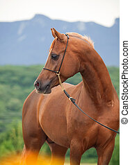portrait of beautiful sorrel horse