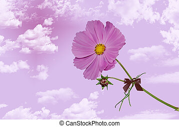 In Pink Clouds - Single cosmos flower in pink clouds.