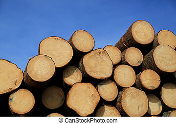 Timber Logs and Blue Sky - Stack of wooden logs with annual...