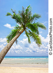 Tropical white sand beach with palm tree