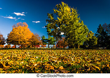Autumn color at Gettysburg National Cemetary, Pennsylvania....