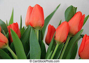 Array of colorful tulips - Gorgeous arrangement of colorful...
