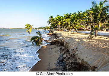 Eroded beach with palms, Pititinga, Natal Brazil