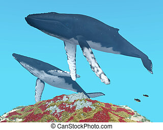 Humpback Whales - Computer generated 3D illustration with...