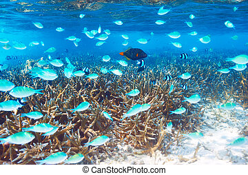 Coral reef at Maldives - Coral reef at South Ari Atoll,...