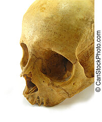 skull - image of a skull on a white background
