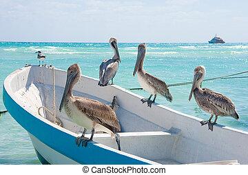 Pelicans at Playa Del Carmen, Mexico - Pelicans sunning...