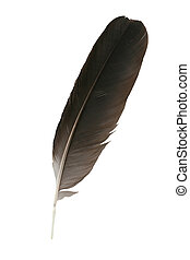 feather close-up - black feather close-up on a white...