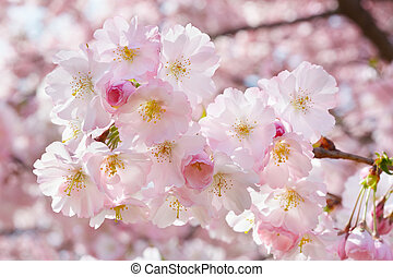 Spring twig with pink flowers