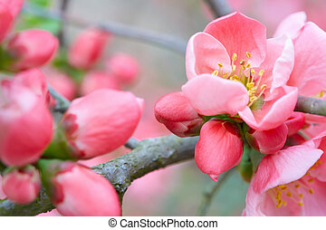 Spring flowers with pink blossom and buds
