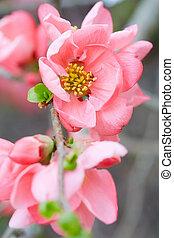 Spring pink flowers macro